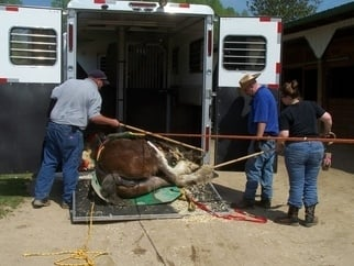 Loading horse secured to a glide into trailer for transport to NCSU Vet Hospital.