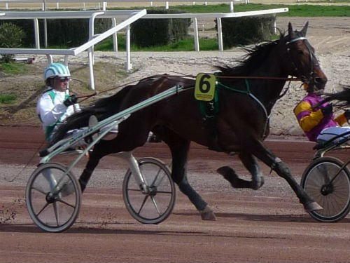 Sit In the Driver's Seat with Harness Racing!