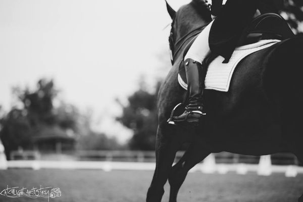 7 horse photography tips take great photos of your own