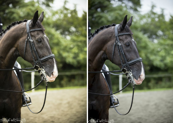 horse photography tips - editing