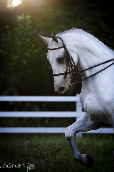 horse photography tips - correct lighting