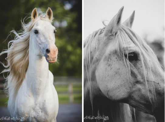 horse photography tips - stallion