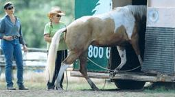 Kelly Sigler provides 5 tips to load your horse onto the horse trailer.