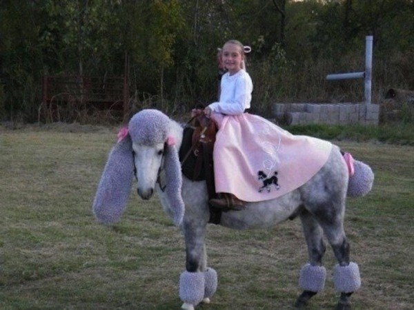 25 horse rider halloween costume ideas you wont believe horse poodle horse costume solutioingenieria Image collections