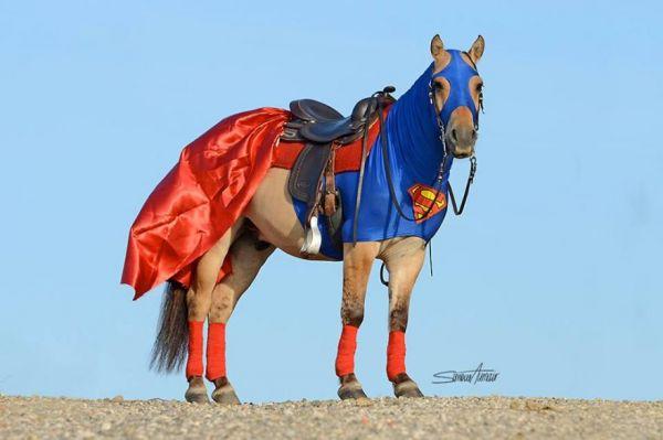 25 horse rider halloween costume ideas you wont believe super horse costume solutioingenieria Image collections