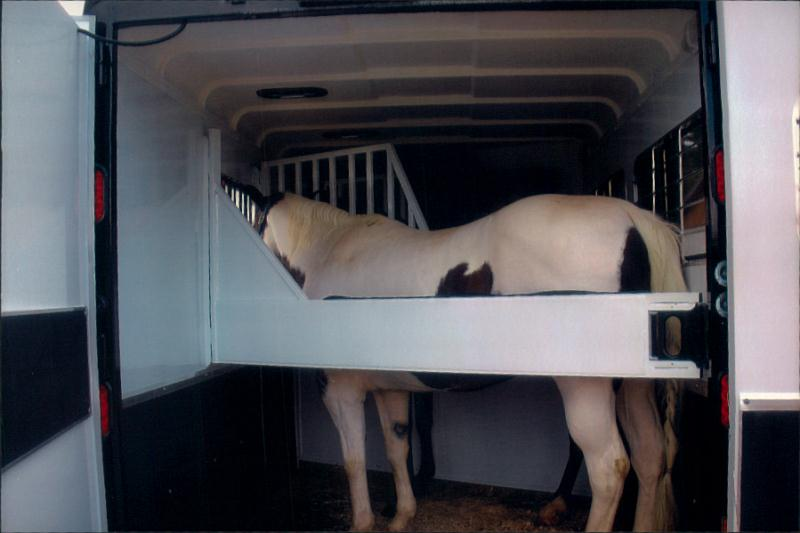 horse loaded in trailer