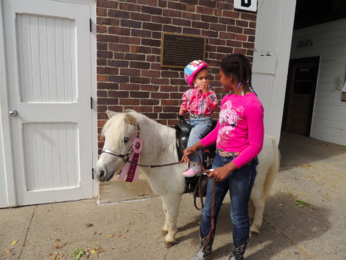 volunteer at healing hearts with horses