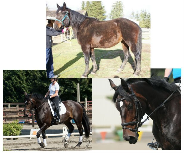 Delilah Before and After - SAFE horse rescue
