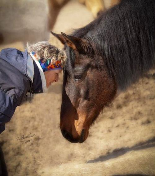 Western Montana Equine Rescue and Rehabilitation