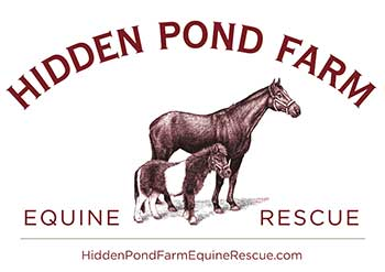 Hidden Pond Farm Equine Rescue - Brentwood, New Hampshire