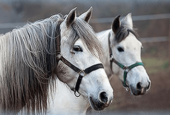 hope for horses arkansas