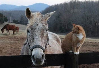 Hopes Legacy horse rescue