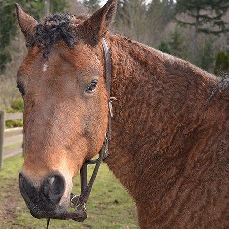 Owen the rescue horse at SAFE rescue