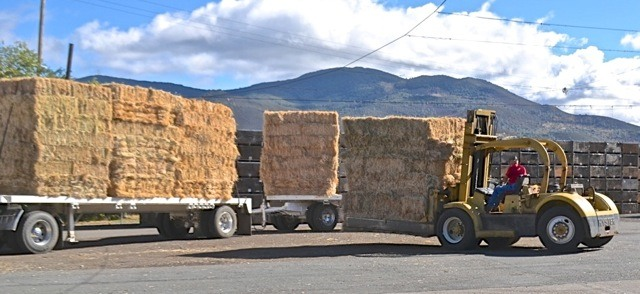 hay donation during wildfire 2015