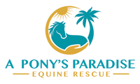 New York Horse Rescue