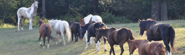Save the horses rescue