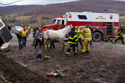 Would you know who to call if there was an emergency situation with your horse?  (This picture does not show 4HFES and NCSMART workers or techniques) Photo Credit: www.flickr.com/photos/watershedpost/5625972786/ via photopin.com, creativecommons.org/licenses/by/2.0/, cc
