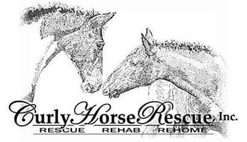 curly horse rescue