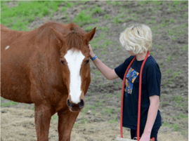 healing-with-horses-ranch
