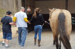 take-heart-counseling-and-equine-assisted-therapy