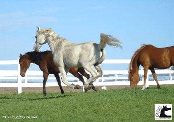 Freeman Arabian Ranch & Rescue – Meriden, Kansas
