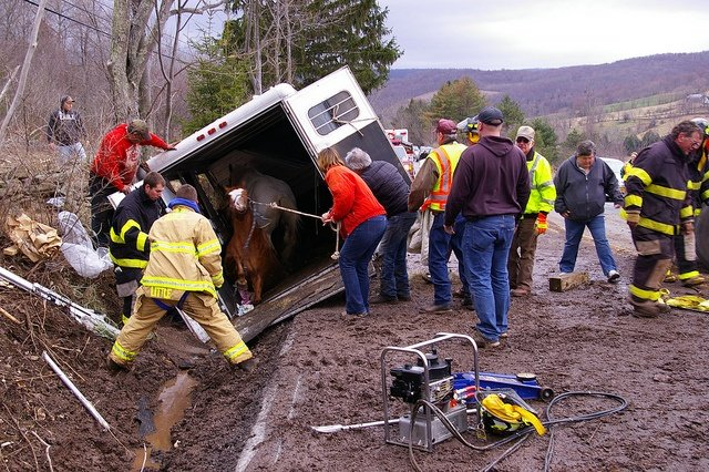 Horses are rescued from this overturned horse trailer.  This picture does not depict 4HFES and NCSMART, LLC workder or techniques.  Photo credit:  www.flickr.com/photos/watershedpost/5625969546/ via photopin.com, creativecommons.org/licenses/by/2.0, cc